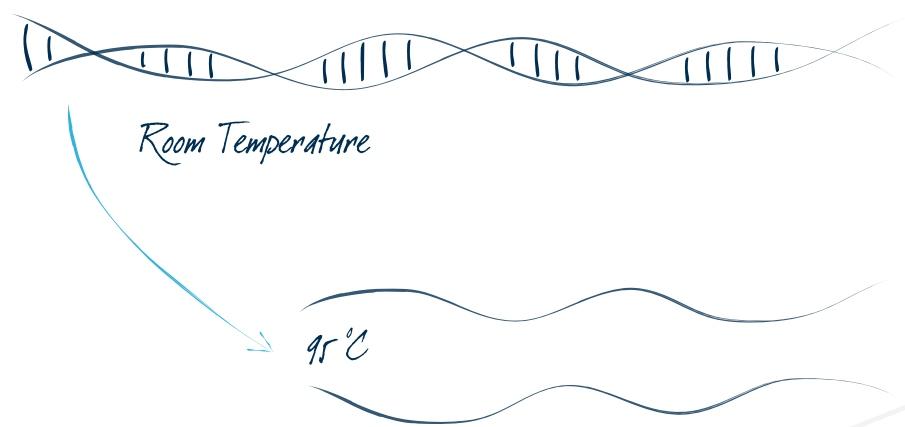 PCR weterynaryjny